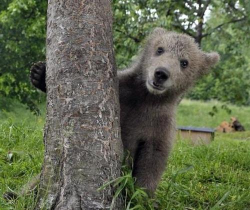 ほのぼのするけどちょっと怖い!幸せそうな動物たちの写真の数々!の画像(18枚目)