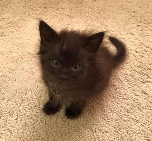 kittens_09