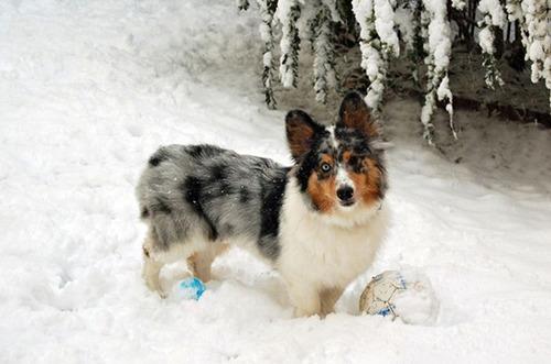 可愛い?可愛くない?ちょっと特徴的な雑種の犬の画像の数々!!の画像(14枚目)