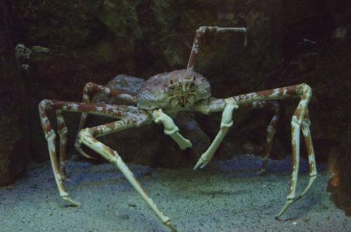深海の生物の画像(25枚目)