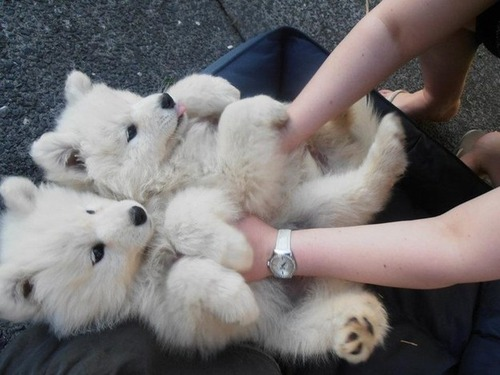かわい過ぎる子犬の画像の数々!の画像(15枚目)