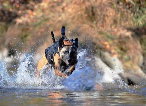 戦地での軍用犬の日常がわかるちょっと癒される画像の数々!!の画像(38枚目)