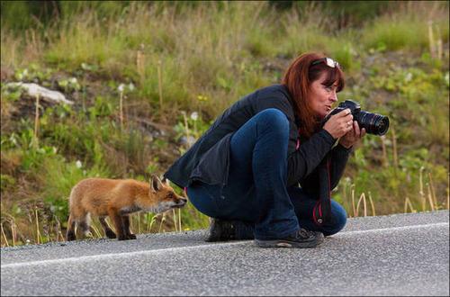 【画像】自然を撮影するカメラマンに興味津々の動物達!!の画像(8枚目)