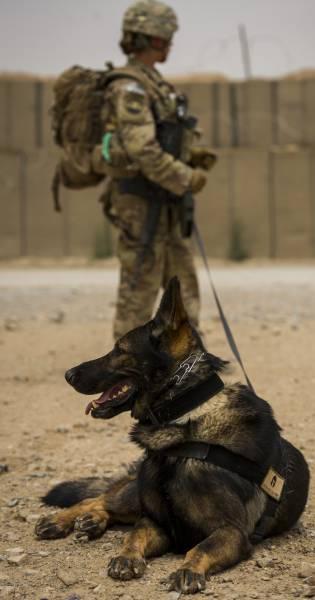 戦地での軍用犬の日常がわかるちょっと癒される画像の数々!!の画像(32枚目)