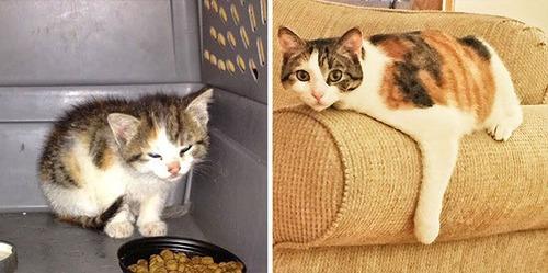 【画像】子汚い野良猫を拾って育てたら、こんなに可愛いニャンコになりましたよ!の画像(22枚目)