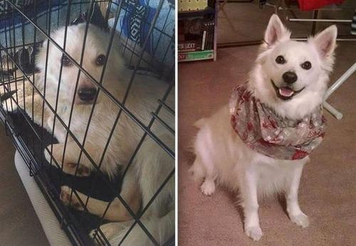 捨て犬が保護された前後の画像(5枚目)