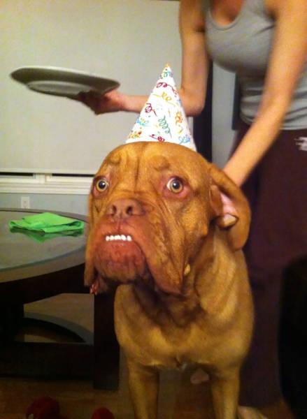 動物達の誕生日の写真の数々!!の画像(38枚目)