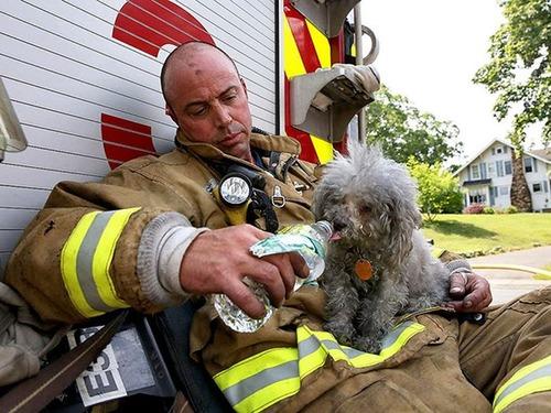 【画像】動物達も本気で助ける!ちょっと癒されるレスキュー隊の仕事の様子!!の画像(20枚目)