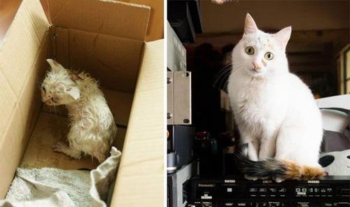 【画像】子汚い野良猫を拾って育てたら、こんなに可愛いニャンコになりましたよ!の画像(3枚目)
