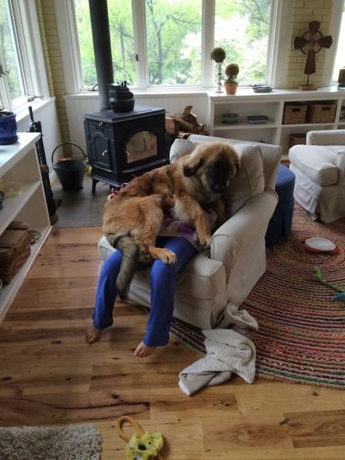 犬は可愛いけど、かなりジャマな感じの犬の画像の数々!!の画像(26枚目)