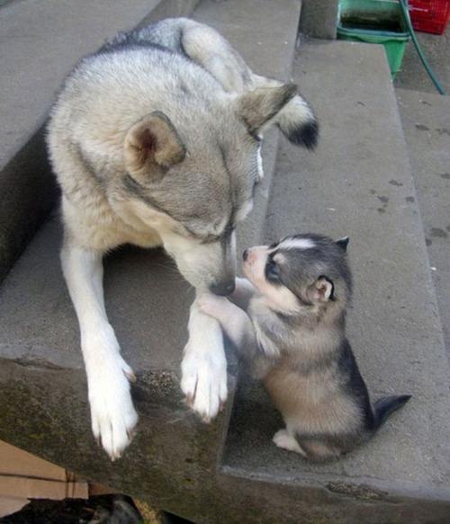 色々な動物の親子の癒される画像の数々!!の画像(22枚目)