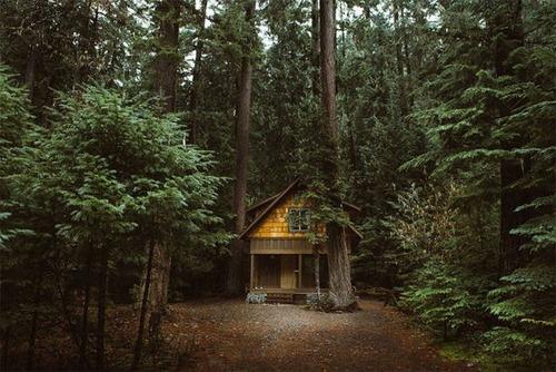 森の中の隠れ家の画像(22枚目)