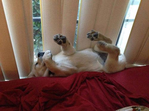 どこでも寝れる!?どこでも寝てる可愛い犬の画像の数々!!の画像(13枚目)