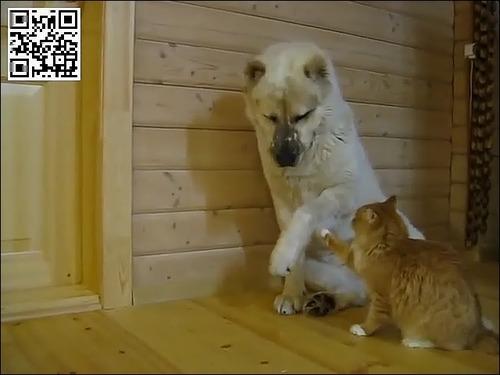 たぶん仲がよい犬と猫ww_000040890