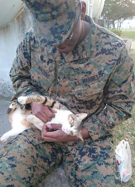 戦場にもネコは居る!!極限状態でも癒される戦場のネコの画像の数々!!の画像(7枚目)
