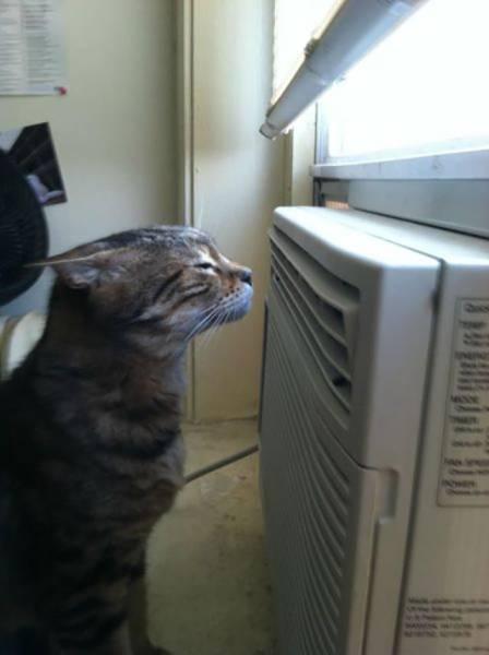 暑いから仕方ない!暑い夏に見かける風景の画像の数々!!の画像(35枚目)
