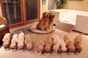 かわい過ぎる子犬の画像の数々!の画像(51枚目)