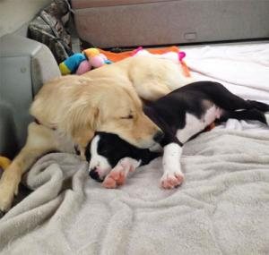 ずっと友達!仲がいい犬たちの画像が癒される!!の画像(32枚目)