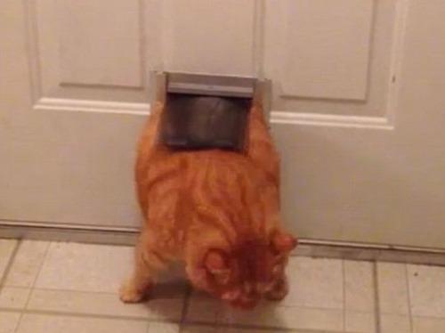 なぜ猫は狭いところが好きなのか??挟まっている猫の画像の数々wwwの画像(10枚目)