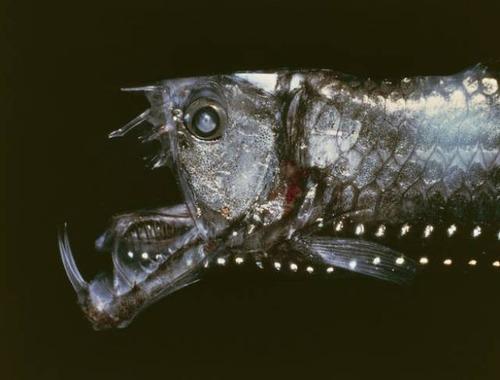 深海の生物の画像(19枚目)