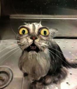 動物達が驚いている瞬間の表情をとらえた写真が凄い!の画像(43枚目)