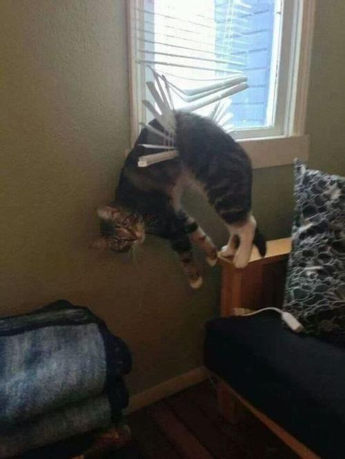 なぜ猫は狭いところが好きなのか??挟まっている猫の画像の数々wwwの画像(6枚目)