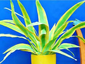 【画像】狭くても大丈夫!小さな植木が綺麗に飾れる工夫の数々!の画像(22枚目)