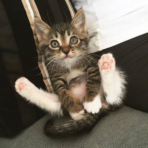 kittens_16