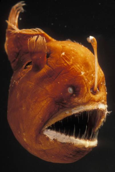 深海の生物の画像(1枚目)