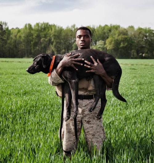 戦地での軍用犬の日常がわかるちょっと癒される画像の数々!!の画像(14枚目)