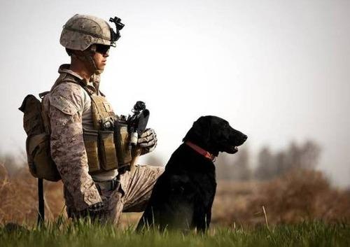 戦地での軍用犬の日常がわかるちょっと癒される画像の数々!!の画像(37枚目)