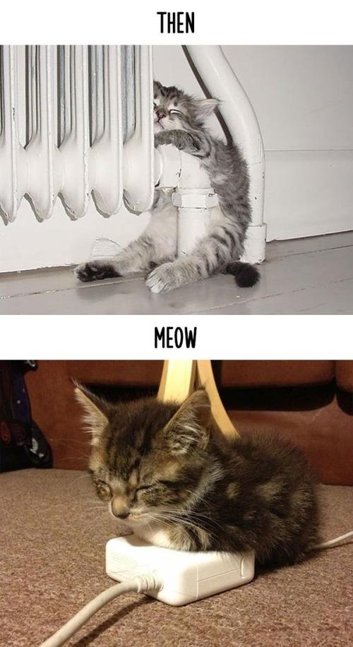 テクノロジーの進化がネコ達に与えた影響の比較画像の数々!!の画像(16枚目)