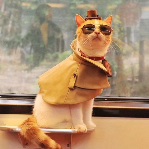 猫ちゃんのかわいいコスプレの画像(5枚目)