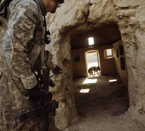 戦地での軍用犬の日常がわかるちょっと癒される画像の数々!!の画像(42枚目)