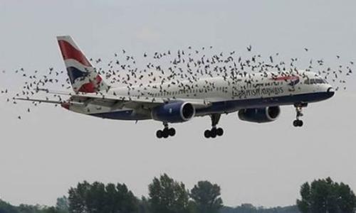 事故=大惨事!笑えるか笑えないか微妙な飛行機事故の画像の数々!!の画像(25枚目)