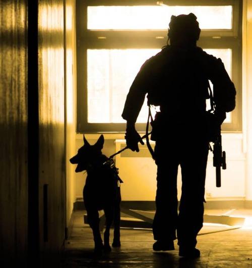 戦地での軍用犬の日常がわかるちょっと癒される画像の数々!!の画像(16枚目)