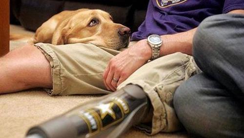 辛くても癒される!軍用犬でほのぼのしている写真の数々!!の画像(7枚目)