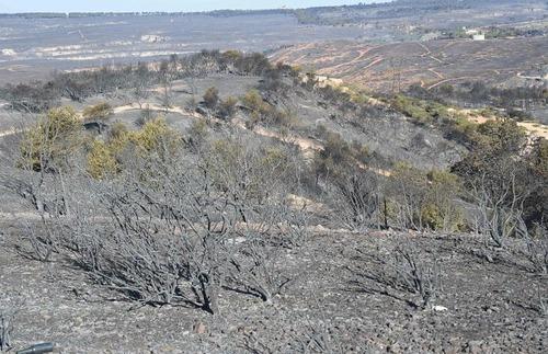 フランスのマルセイユの山火事の画像(15枚目)