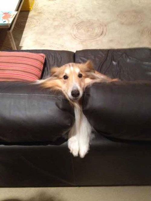 挟まっている犬の画像(7枚目)