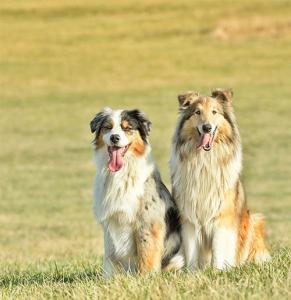 ずっと友達!仲がいい犬たちの画像が癒される!!の画像(14枚目)