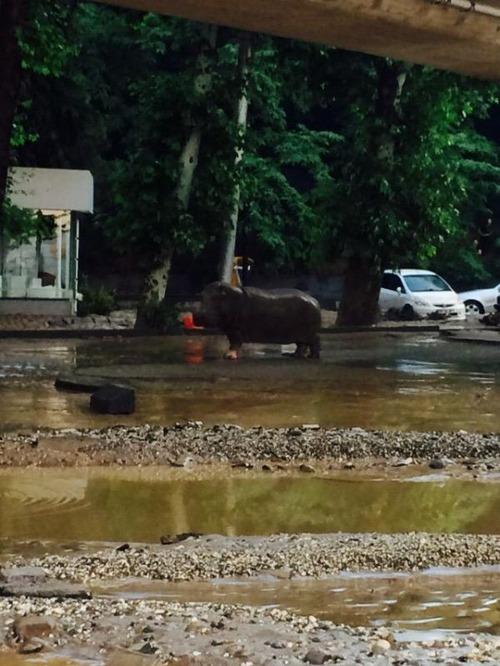 洪水で動物達が大脱走した時の写真の数々wwの画像(7枚目)