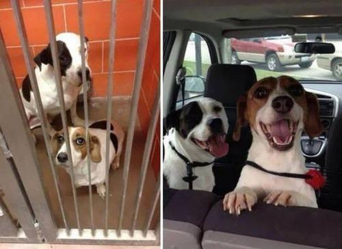 捨て犬が保護された前後の画像(11枚目)