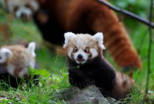 動物達が驚いている瞬間の表情をとらえた写真が凄い!の画像(6枚目)