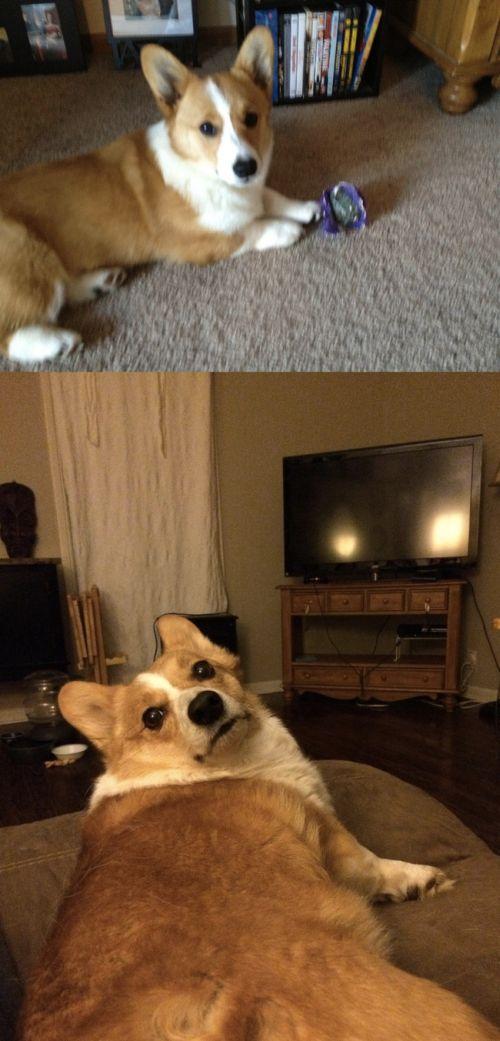 犬や猫の最初に撮った写真と最後に撮った写真の数々の画像(23枚目)