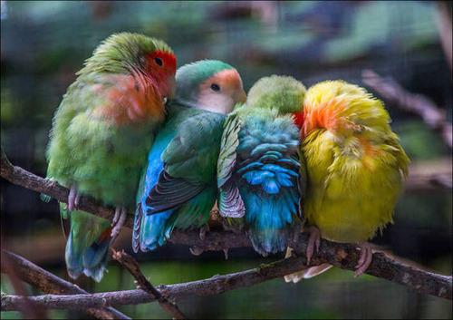 超過密!密集状態の鳥の画像がもふもふで癒されるwwの画像(20枚目)