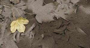 チリのカルブコ火山の噴火で街に積もった火山灰が酷い…の画像(13枚目)