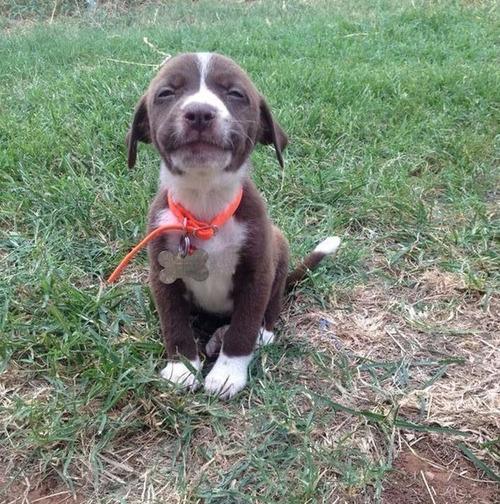 かわい過ぎる子犬の画像の数々!の画像(4枚目)