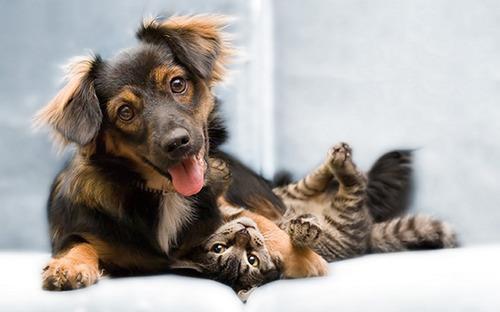 ほのぼのする!仲の良い犬と猫の画像の数々!!の画像(34枚目)
