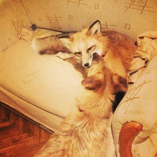犬と猫と仲良しのキツネの画像(17枚目)