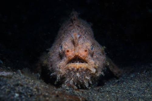 深海の生物の画像(2枚目)